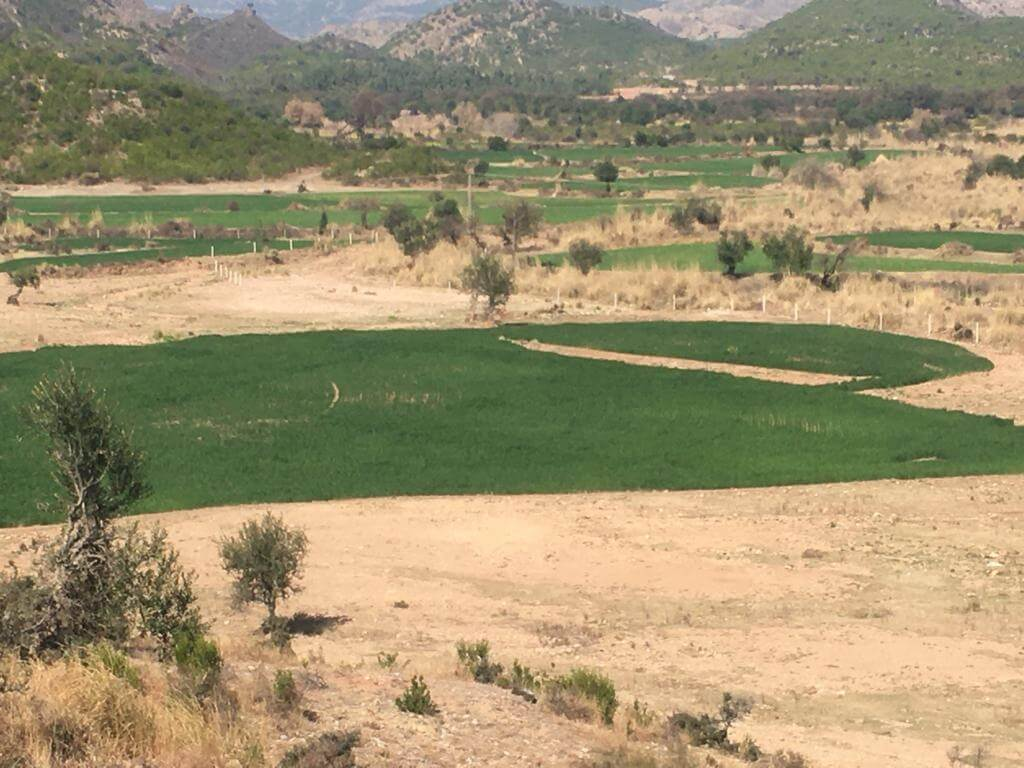 Agricultural Land for Sale in, Kohat Road Fateh Jang